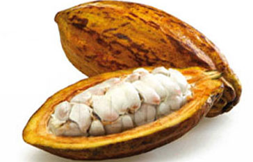 Cacao Martinique